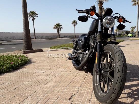 Moto au Maroc HARLEY-DAVIDSON Sportster 883 Iron - 266969