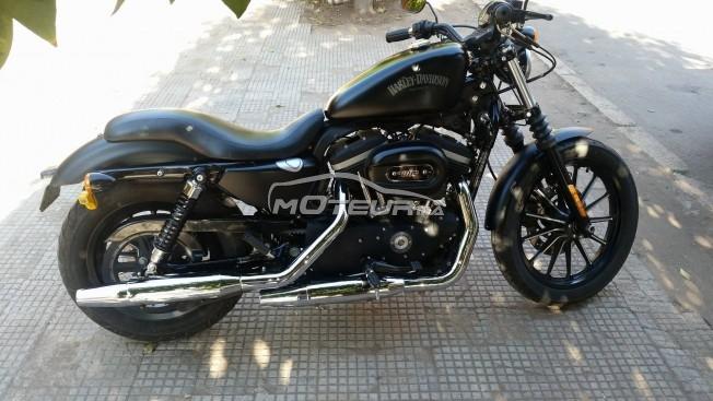 Moto au Maroc HARLEY-DAVIDSON Sportster 883 - 147232
