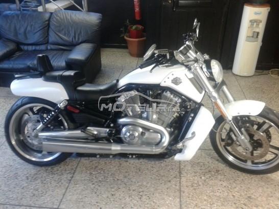 Moto au Maroc HARLEY-DAVIDSON Vrscf v-rod muscle - 137036